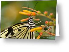 Paper Kite Butterfly With Orange Flower Greeting Card