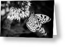 Paper Kite In Black And White Greeting Card