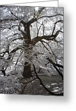 Paper Mulberry In Infrared Greeting Card