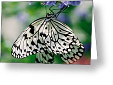 Paper Rice Butterfly Greeting Card