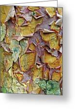 Paperbark Maple Tree Greeting Card