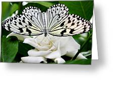 Paperkite On Gardenia Greeting Card
