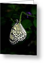 Paperwhite Butterfly Greeting Card