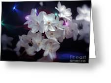 Paperwhites Greeting Card