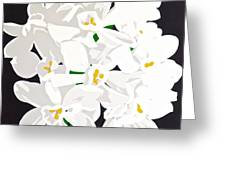 Paperwhites Greeting Card