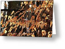 Papery Beech Leaves Greeting Card