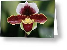 Paphiopedilum Orchid Greeting Card