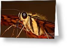 Papilio Demoleus Greeting Card