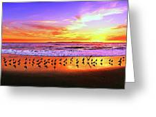 Paradise Found, Huntington Beach, California, Catalina Island Greeting Card
