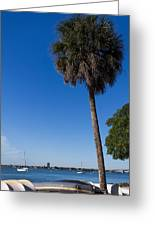Paradise In Sarasota, Fl Greeting Card by Michael Tesar