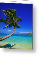 Paradise Palm Over Lanikai Greeting Card