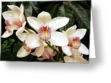 Paradise Perfection Greeting Card