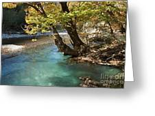 Paradise River Greeting Card
