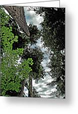 Paradise To Lovers Of Big Trees - Olympic National Park Wa Greeting Card by Christine Till