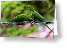 Parakeet Couple Greeting Card