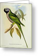 Parakeet Greeting Card