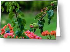 Parakeet South Maui Greeting Card