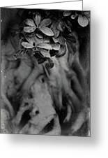 Parallel Botany #5175 Greeting Card