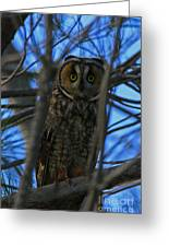 Parallel Leanings - A Hooter Study Greeting Card