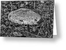 Parasol Mushroom #h2 Greeting Card