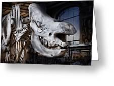 Paris Gallery Of Paleontology 3 Greeting Card