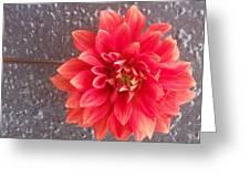 Parisian Flower Greeting Card