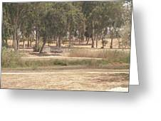 Park Near The Source Of The Yarkon River Greeting Card