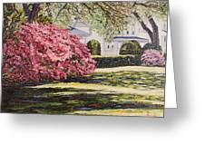 Park Spring Blossom With Shadows Greeting Card