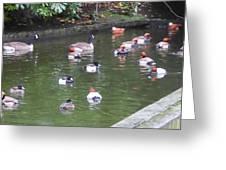 Park Waterfowl Greeting Card