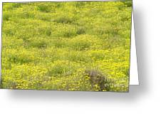 Parker Ranch Field Of Yellow Greeting Card
