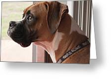 Parker The Boxer Greeting Card