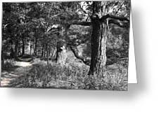 Parkland Trail Greeting Card