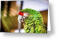 Parrot 2 Greeting Card