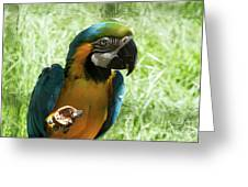 Parrot Eating Nut Greeting Card