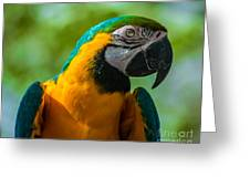 Parrot Face Greeting Card