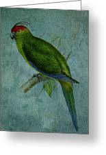 Parrot Fashion Greeting Card