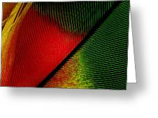 Parrot Feather Macro Greeting Card