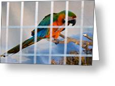 Parrot In A Cage Greeting Card