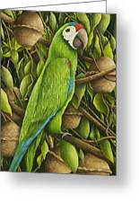 Parrot In Brazil Nut Tree Greeting Card