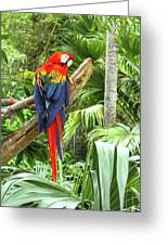 Parrot In Tropical Setting Greeting Card