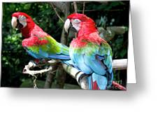 Parrot Partners Time To Make Up Greeting Card