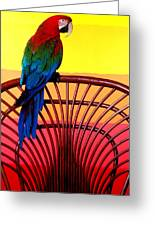 Parrot Sitting On Chair Greeting Card by Garry Gay