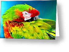 Parrot Time 1 Greeting Card