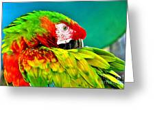 Parrot Time 2 Greeting Card