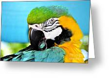Parrot Time 3 Greeting Card