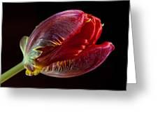 Parrot Tulip 11 Greeting Card by Robert Ullmann