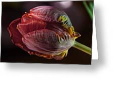 Parrot Tulip 4 Greeting Card