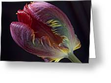 Parrot Tulip 5 Greeting Card by Robert Ullmann