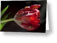 Parrot Tulip 7 Greeting Card by Robert Ullmann