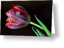 Parrot Tulip 8 Greeting Card by Robert Ullmann